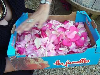 rosesblog.jpg