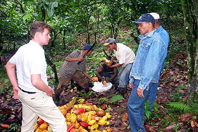 harvestingdagobabeans.jpg