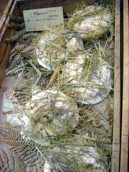 fennelcheeseparis.jpg