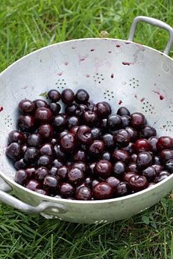 cherry-jam-cherries