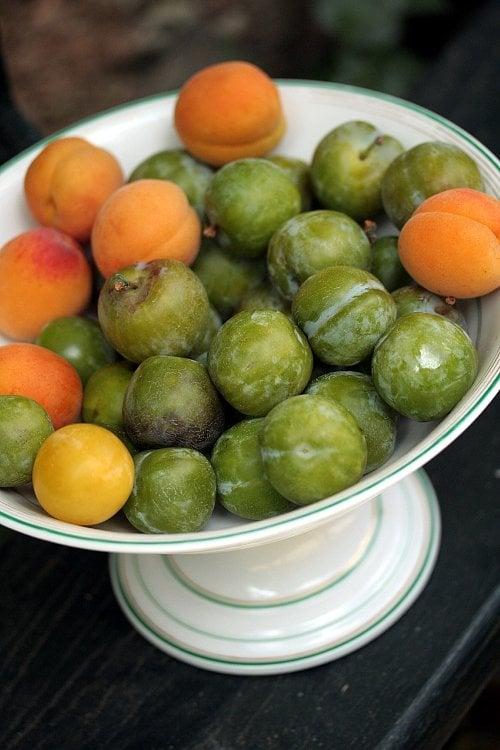 apricots & reine claude plums