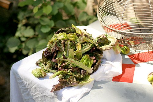 drying lettuce