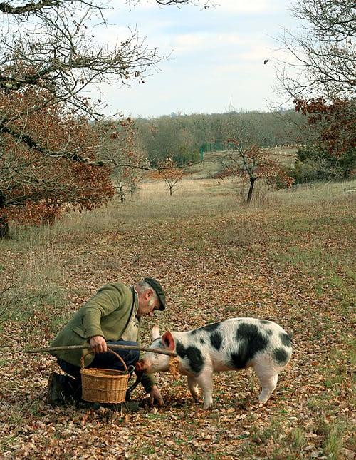 truffle hunting scene