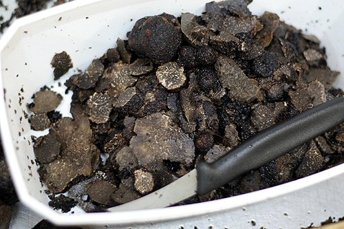 sliced black truffles & knife