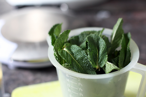 measuring mint leaves