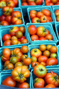 greenmarket tomatoes