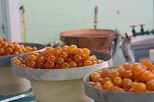 candied clementines in Provence