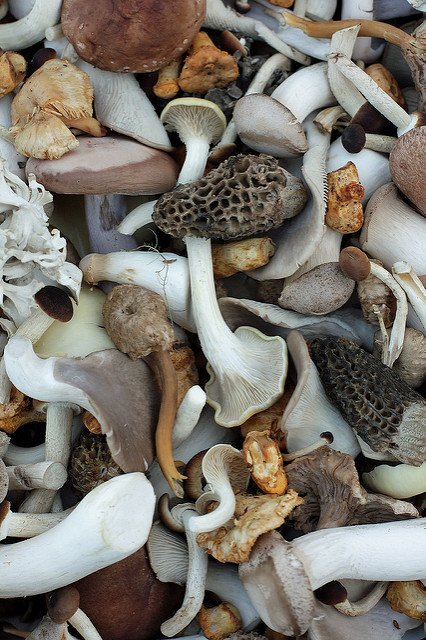 gorgeous Swiss mushrooms