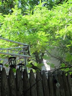 back forty backyard