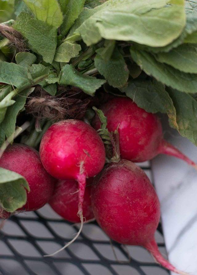 Pickled radish recipe