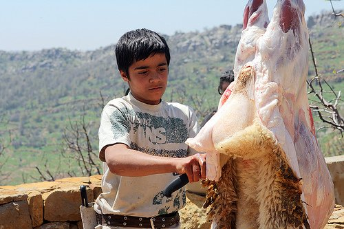 twelve year old butcher