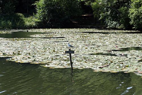 étang de corot