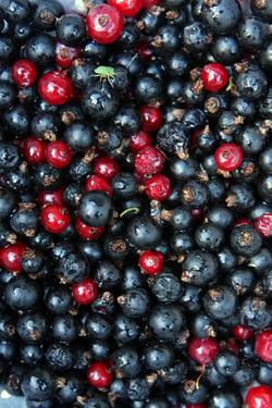 black currant jam