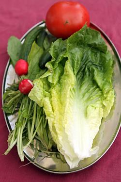 lettuce, tomato, radish
