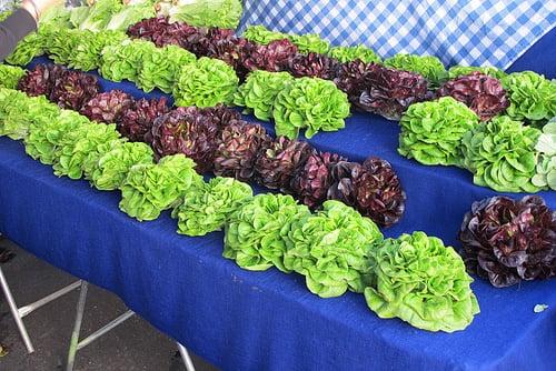 market lettuce at Hollywood Farmers Market