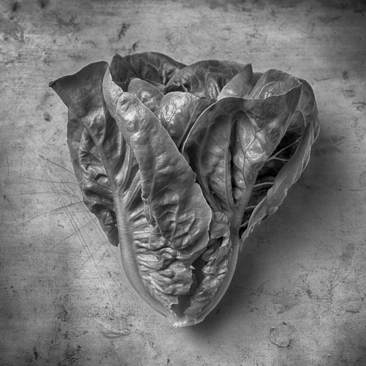 Interview with Food Photographer Michael Lamotte & From the Source ...